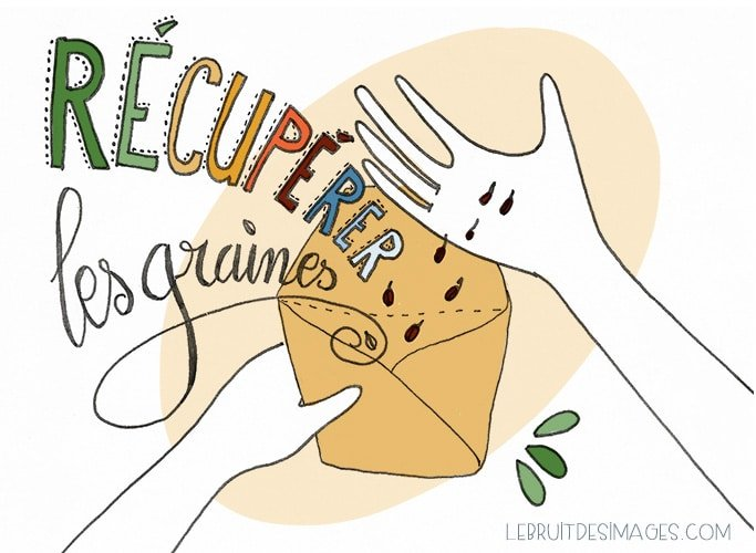 101 Gestes écolos (67) : Récupérer les graines