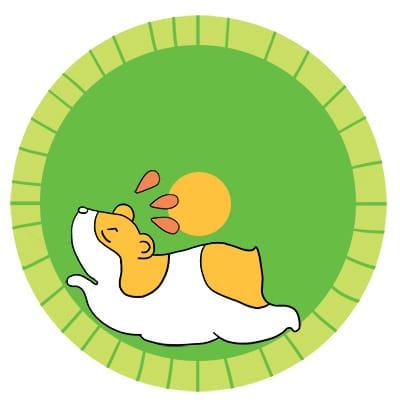 Hamster qui court dans sa roue