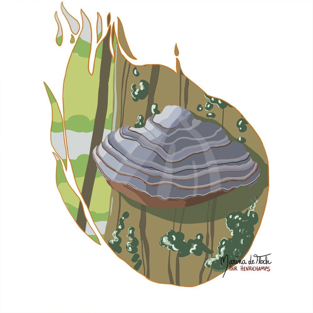Marina le Floch illustration amadouvier pour Henrichamps asbl